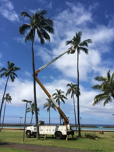 Trimming a very tall tree with a lifter
