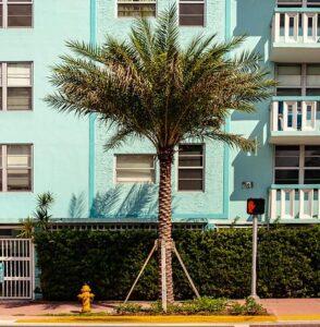 Beautiful braced palm tree